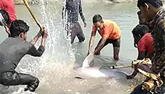 Mob kills rare Gangetic dolphin after brutally beating it with sticks in India